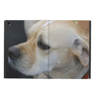Perro portugués del indicador
