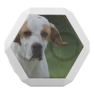 Perro portugués dulce del indicador altavoces bluetooth blancos boombot REX