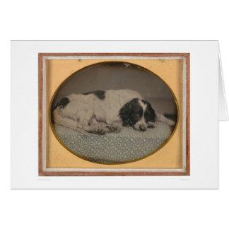 Perro poseído por Sheldon Nichols (39986) Tarjeta De Felicitación