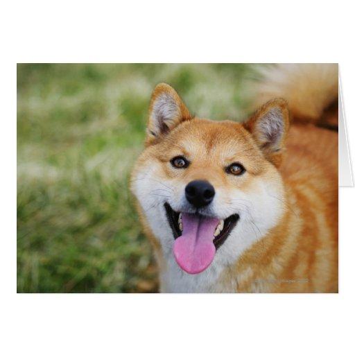 Perro, primer tarjetas