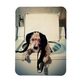 Perro que ayuda hacia fuera con el lavado iman flexible
