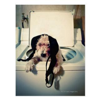 Perro que ayuda hacia fuera con el lavado tarjetas postales