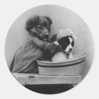 Perro que baña el perro etiquetas