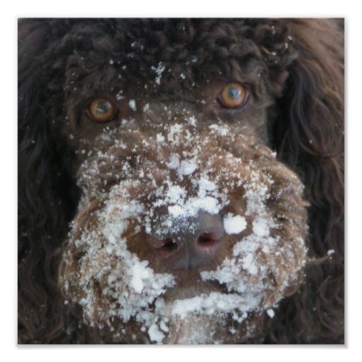 Perro que come nieve posters