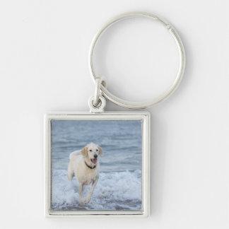 Perro que corre en agua en la playa llavero cuadrado plateado