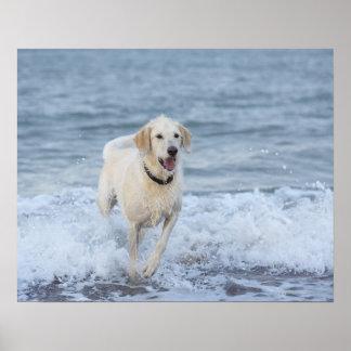 Perro que corre en agua en la playa póster