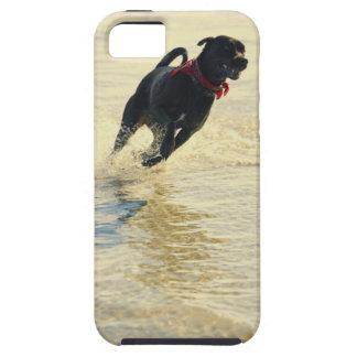 Perro que corre en agua funda para iPhone SE/5/5s