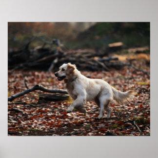 Perro que corre en las hojas secas póster