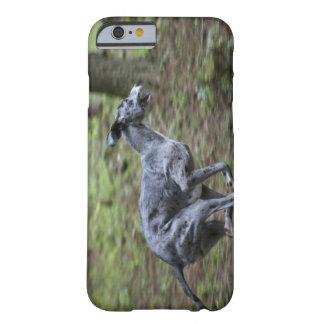 Perro que corre en maderas funda barely there iPhone 6