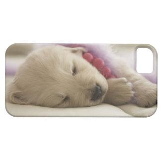 Perro que duerme en cama iPhone 5 carcasa