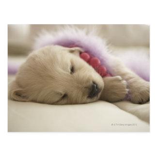 Perro que duerme en cama tarjetas postales