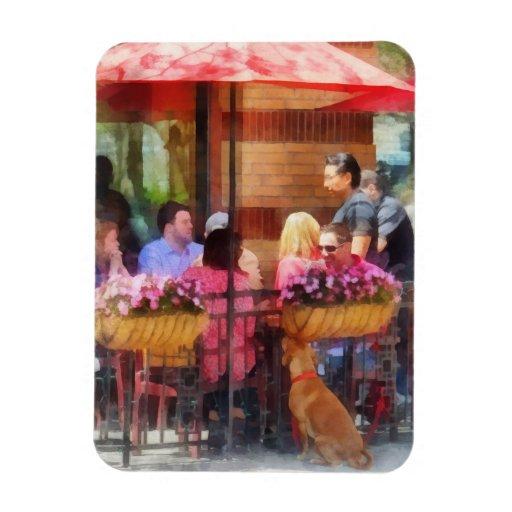 Perro que espera en el café Hoboken NJ Iman De Vinilo