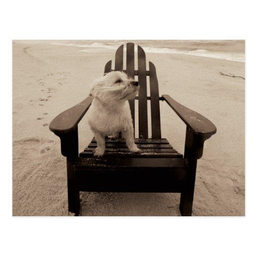 Perro que goza de la playa tarjeta postal
