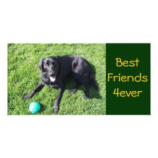 Perro que juega con la bola - mejores amigos tarjeta fotografica personalizada