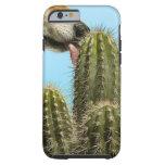 Perro que lame el cactus, primer funda de iPhone 6 tough