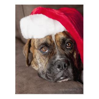 Perro que lleva el gorra de Santa Tarjetas Postales