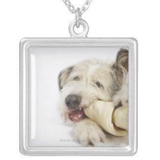 Perro que mastica en el hueso del cuero crudo joyerias personalizadas