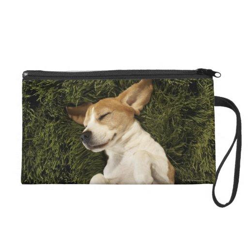 Perro que miente en dormir de la hierba