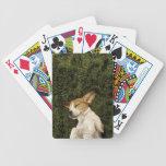 Perro que miente en dormir de la hierba baraja cartas de poker