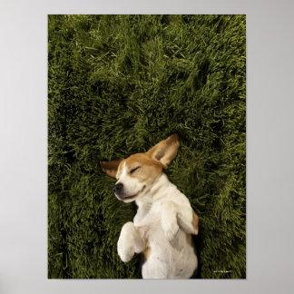 Perro que miente en dormir de la hierba póster