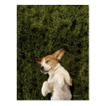 Perro que miente en dormir de la hierba tarjeta postal