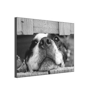 Perro que mira a escondidas a través de la cerca impresión en tela