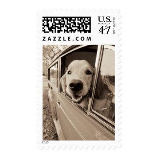 Perro que mira a escondidas hacia fuera una sellos postales