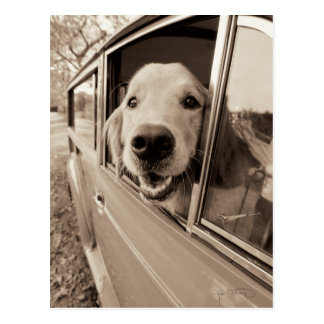 Perro que mira a escondidas hacia fuera una tarjetas postales