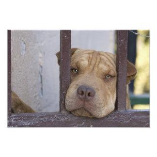 Perro que mira a través de una puerta Valparaiso Foto
