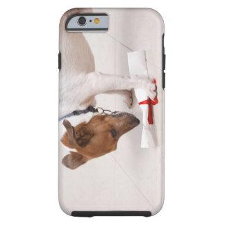 Perro que mira abajo de un diploma funda para iPhone 6 tough
