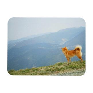Perro que mira abajo en de la colina imán rectangular