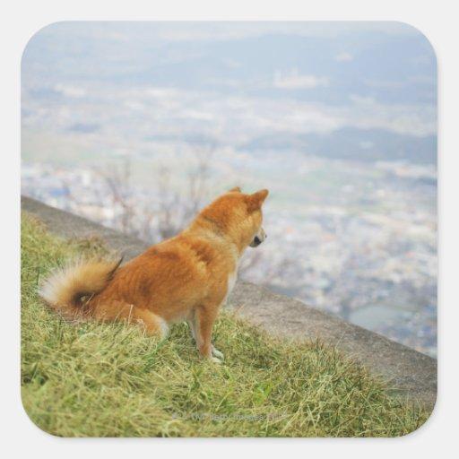 Perro que mira abajo en de la colina pegatina cuadrada