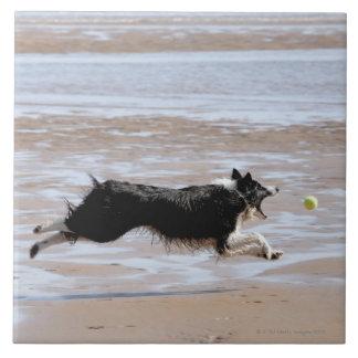 Perro que persigue una bola en la playa azulejo cuadrado grande