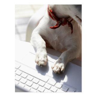 Perro que pone sus manos en un ordenador portátil postal