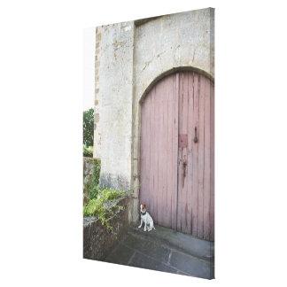Perro que se sienta delante de puertas cerradas lienzo envuelto para galerias