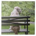Perro que se sienta en banco de parque teja  ceramica