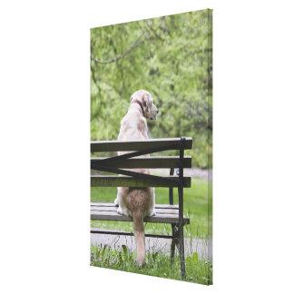 Perro que se sienta en banco de parque impresion de lienzo