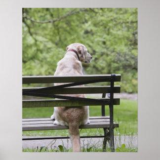 Perro que se sienta en banco de parque posters