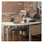 Perro que se sienta en el escritorio tejas  ceramicas