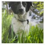 Perro que se sienta en hierba azulejos ceramicos