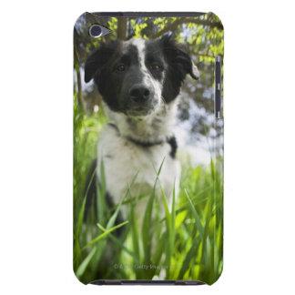 Perro que se sienta en hierba Case-Mate iPod touch protector