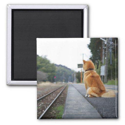 Perro que se sienta en la estación de tren imanes para frigoríficos