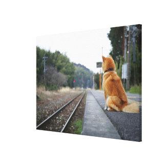 Perro que se sienta en la estación de tren impresión en lienzo estirada