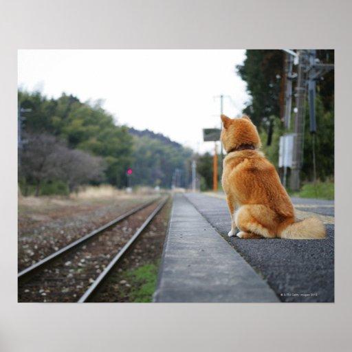 Perro que se sienta en la estación de tren impresiones