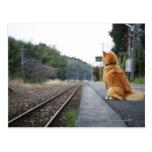 Perro que se sienta en la estación de tren postal