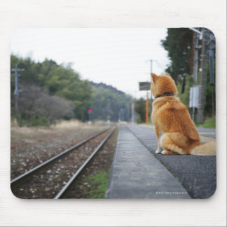 Perro que se sienta en la estación de tren alfombrillas de ratones