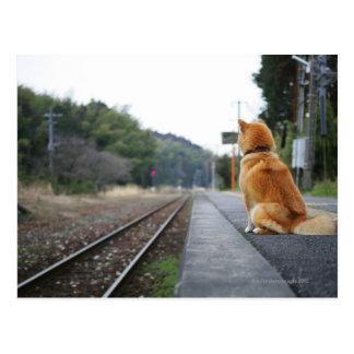 Perro que se sienta en la estación de tren postales