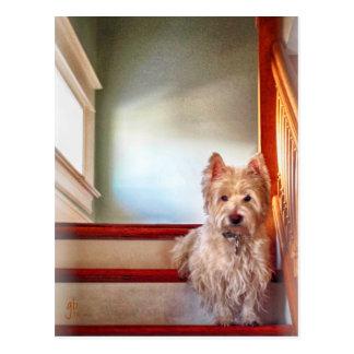 Perro que se sienta en las escaleras, apariencia v tarjeta postal