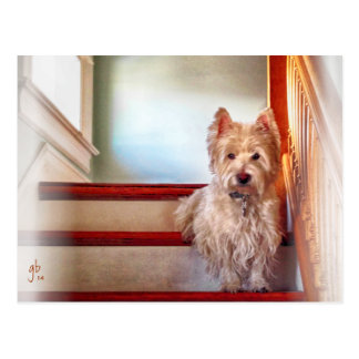 Perro que se sienta en las escaleras, apariencia v postales