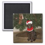 Perro que se sienta por un árbol de navidad imán